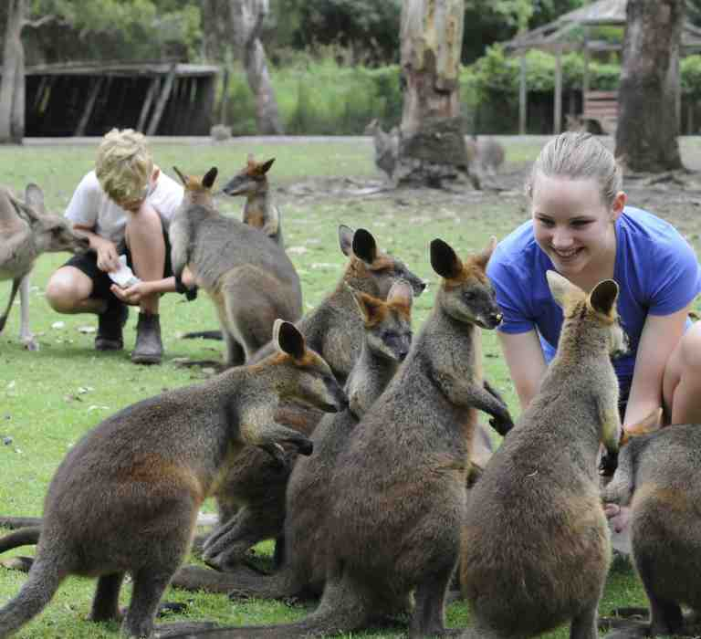 Kangaroo feeding and patting