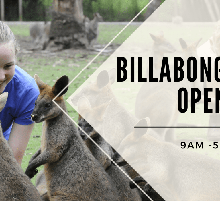 Billabong Zoo, Port Macquarie is Open!